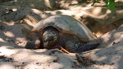 seychelles-05-11061428mwcal.jpg
