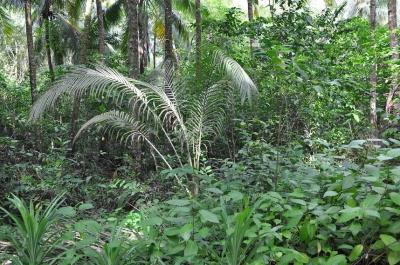 gauthier toulemonde,webrobinson,île,expédition