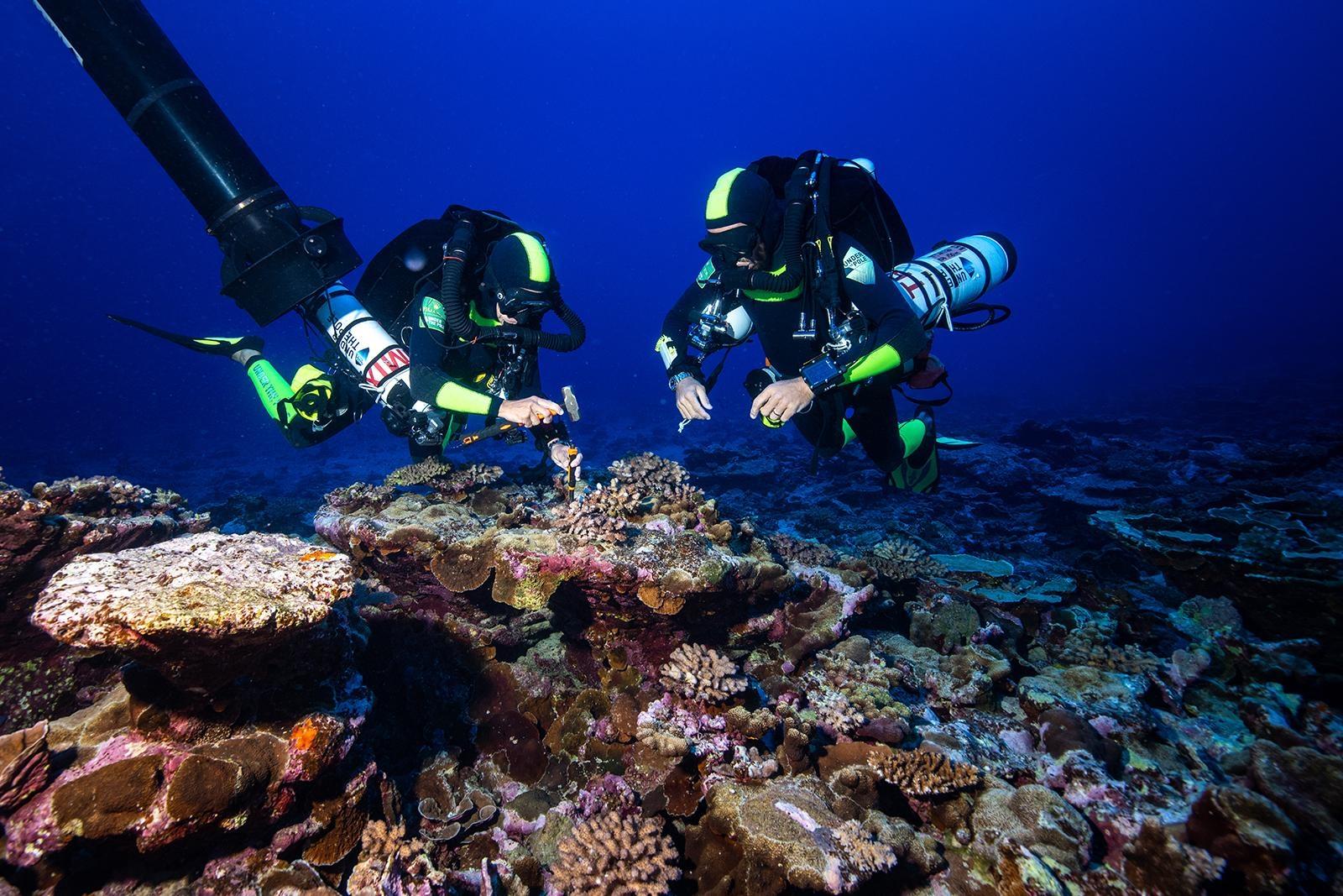 EXPE19 UTPIII corail blanc.jpg