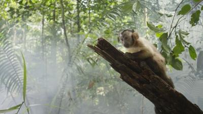 thierry ragobert,amazonia,singe capucin,luc marescot,gédéon programme,nature,forête,amazonie,cinéma,fiction