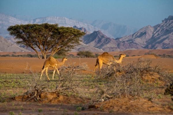Dhofar-Wadi-Dima©-Sultanat-dOman-26-1170x780.jpg