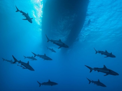 472887-free-diving-on-great-barrier-reef.jpg