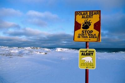 polar bears 3.jpg
