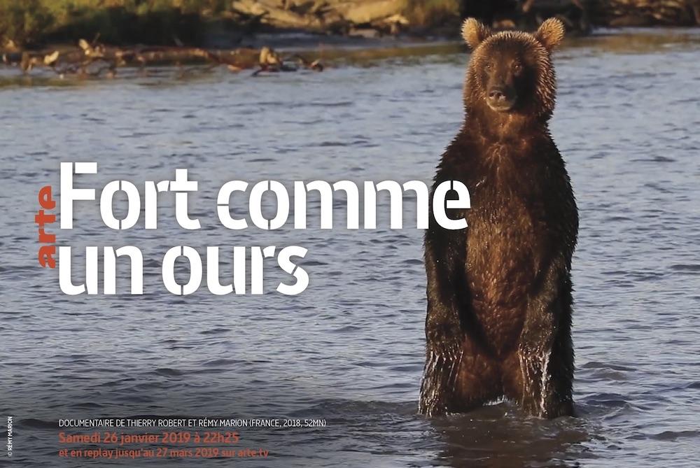 documentaire, animalier, tv, fort comme un ours, thierry robert, rémy marion, enquête, environnement, ours