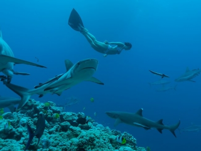 471344-free-diving-on-great-barrier-reef.jpg