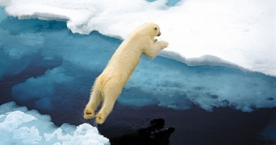polar bears 2.jpeg