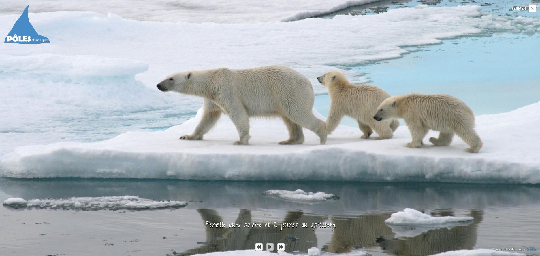 polaire,géopolitique,ours,ours polaire,rémy marion,farid benhammou,éditions hesse